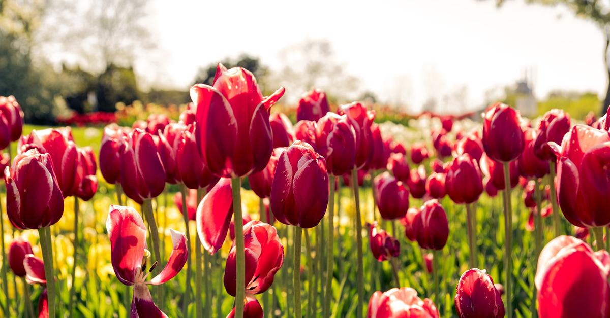Doe een rondje Nederland tijdens Hemelvaart en Pinksteren