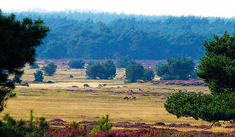 Dwars over de Veluwe 2018